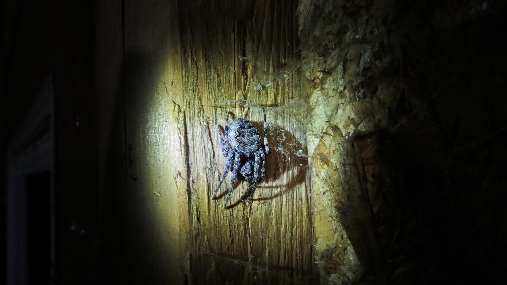 Ils se promènent souvent la nuit près de nous sans qu'on les voie.... Arraig11