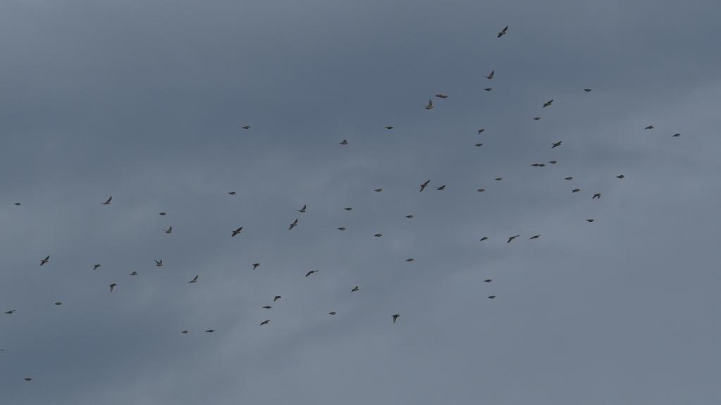 Pouvez-vous identifier ces oiseaux ? Sa5ns_10