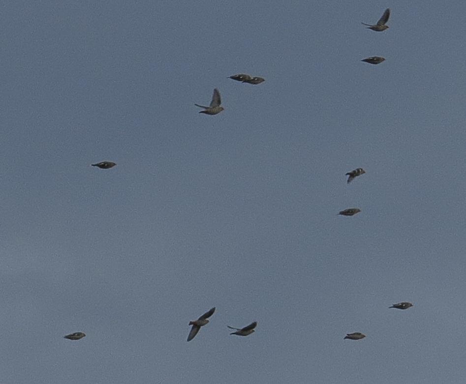 Pouvez-vous identifier ces oiseaux ? Sans_t86