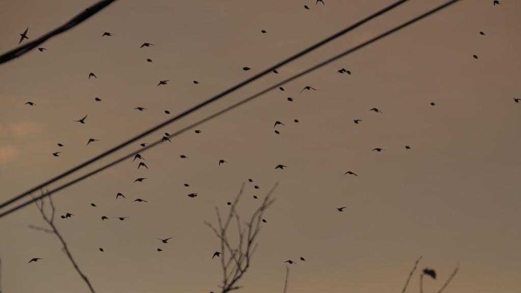 Pouvez-vous identifier ces oiseaux ? Sans_t98