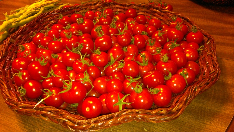 My First Tommy Toe Tomatoes 20130915