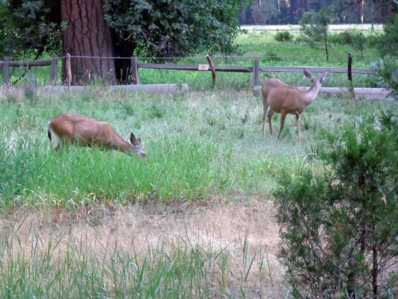 Notre inoubliable périple californien du 25 juin au 16 juillet 2013 (San Francisco, Yosemite, Los Angeles, Legoland, San Diego Zoo & SeaWorld et... DISNEYLAND!)  - Page 5 122