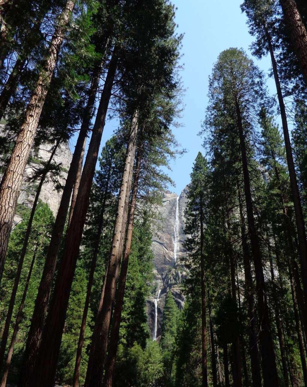 Notre inoubliable périple californien du 25 juin au 16 juillet 2013 (San Francisco, Yosemite, Los Angeles, Legoland, San Diego Zoo & SeaWorld et... DISNEYLAND!)  - Page 5 816