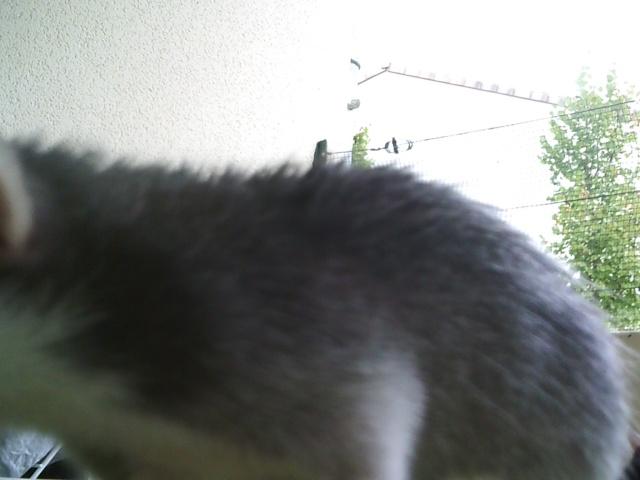 Husky,oui,mais husky quoi ? Sunp0024