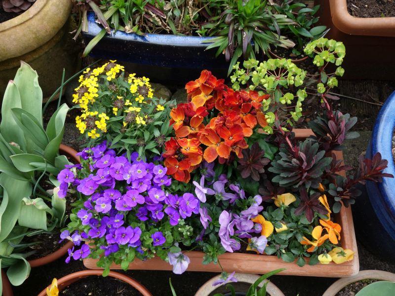 Erste Frühlingsboten im Garten und in Wald und Flur - Seite 51 Dsc05531