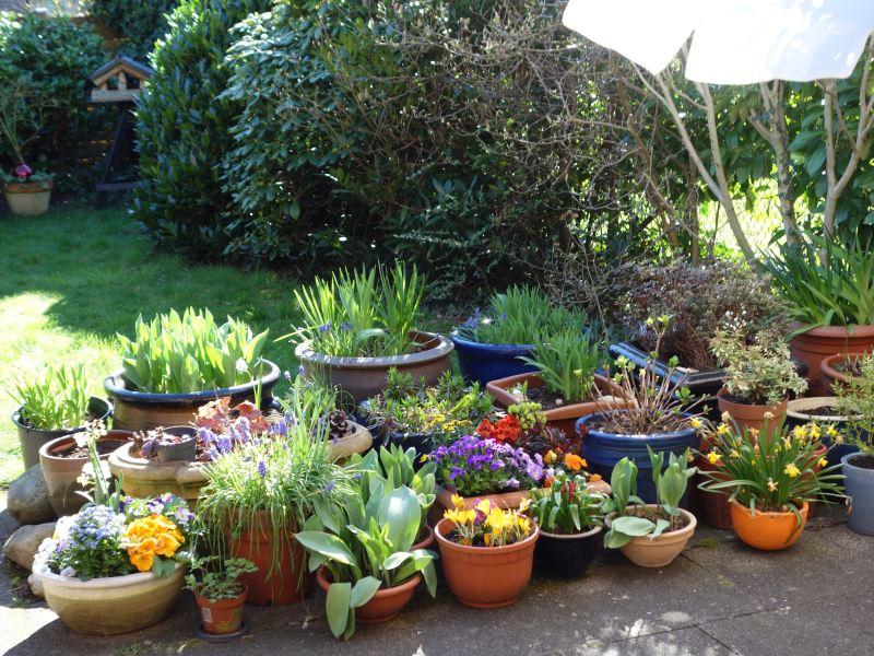 Erste Frühlingsboten im Garten und in Wald und Flur - Seite 51 Dsc05534