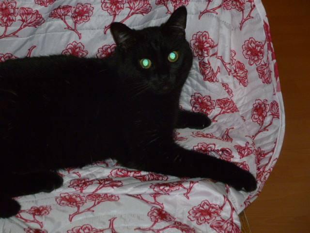 En FALD MOUN (2013) noir 15494210