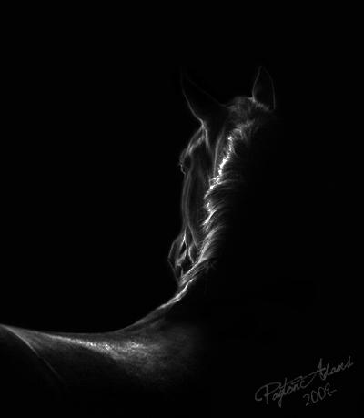 ♠ Black Thief ♠ Isolat11