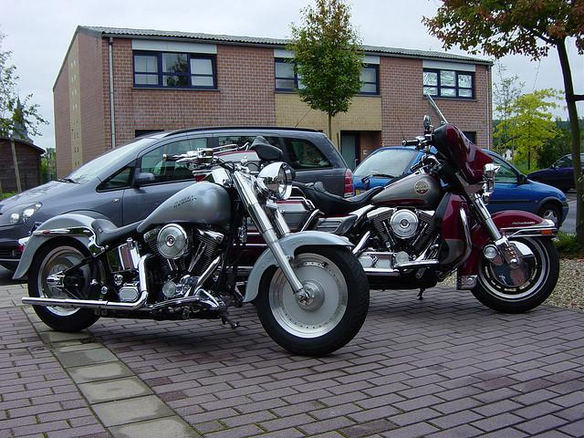 elles sont toutes belles !!!!!! Harley11