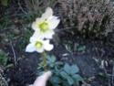 ballade dominicale au jardin Dscn2214