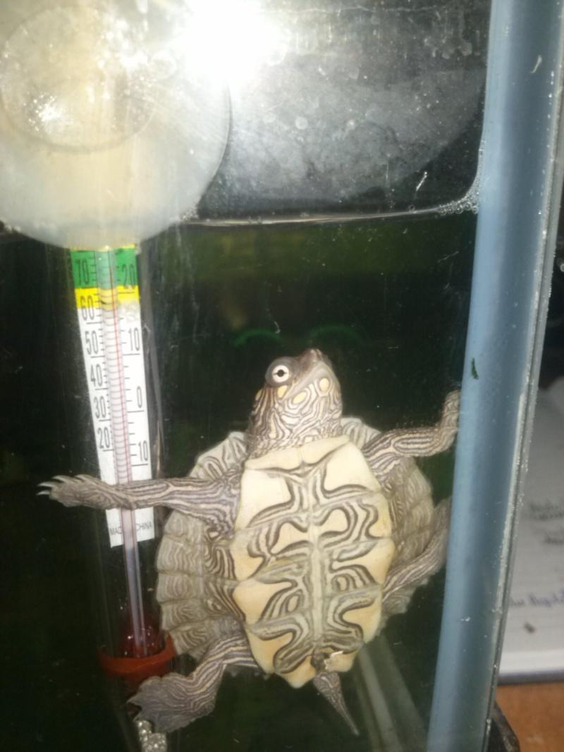 Mes tortues (CID) - Page 16 Portab12