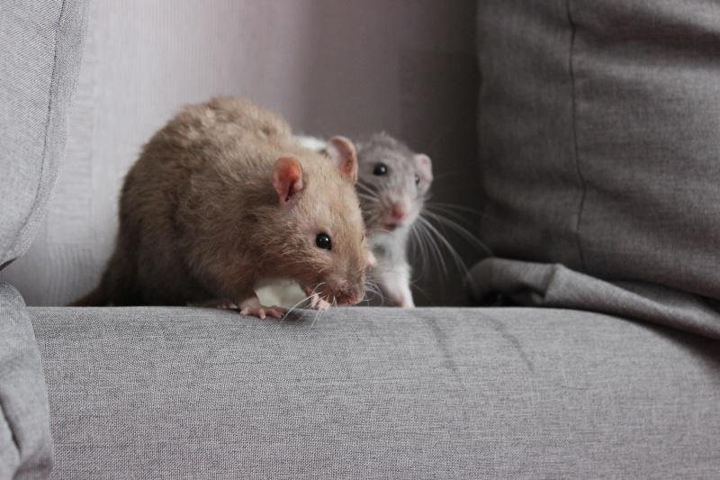 Pablo et  Lenny :) Img_3210