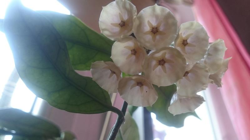 Blüten 2017 - Seite 2 Dsc_0110