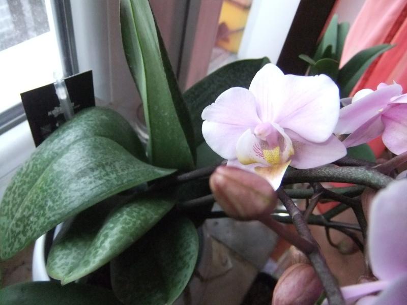 Orchideen - Seite 52 Dscf8558