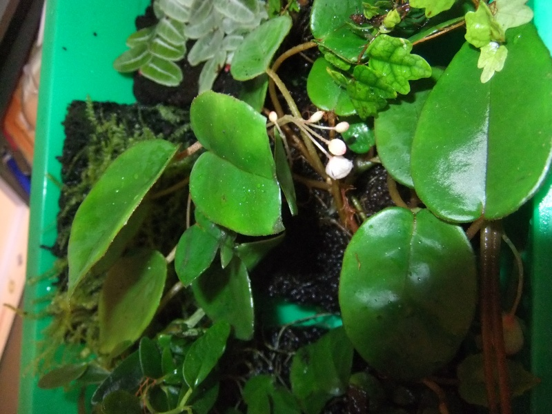 Pflanzenvitrine/Terrarium Dscf8823