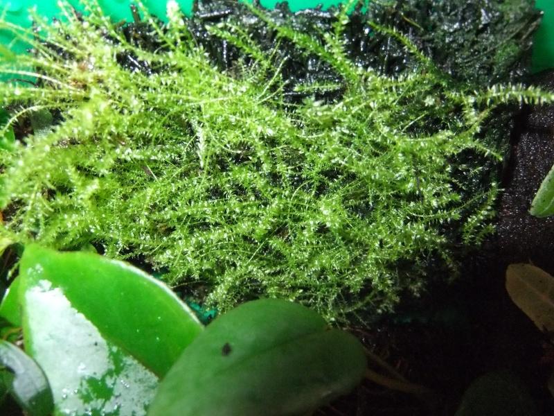 Pflanzenvitrine/Terrarium Dscf8824