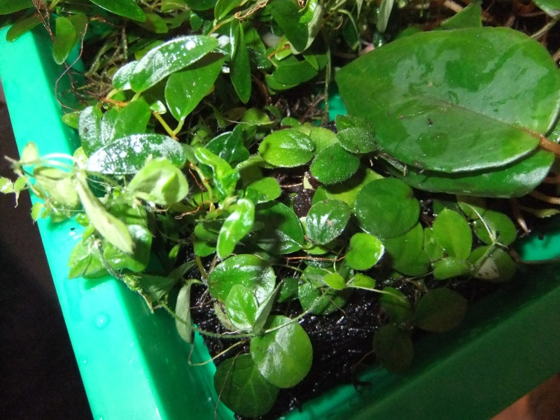 Pflanzenvitrine/Terrarium Dscf8825