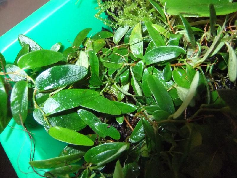 Pflanzenvitrine/Terrarium Dscf8826