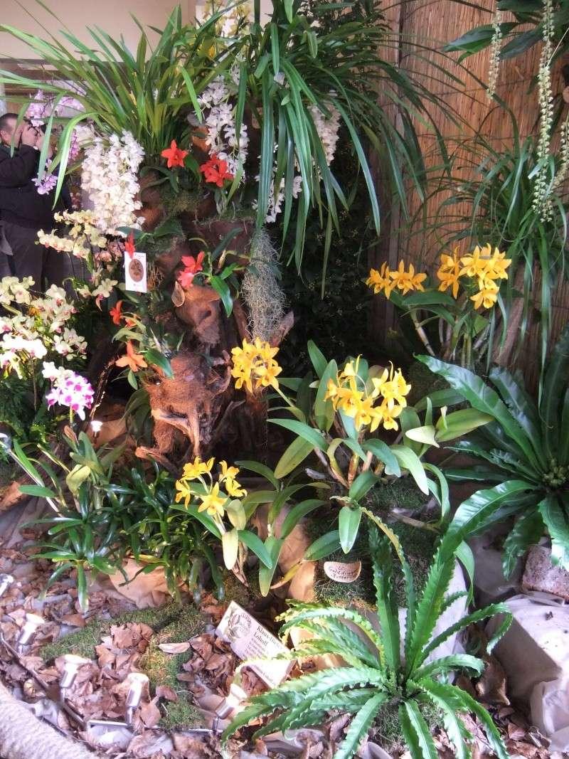 Orchideen-Ausstellungen aus aller Welt Dscf9010
