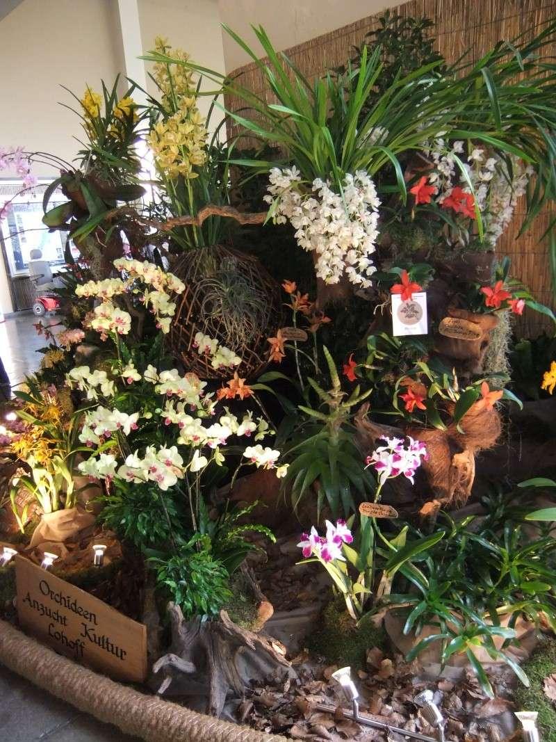 Orchideen-Ausstellungen aus aller Welt Dscf9011