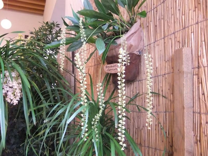 Orchideen-Ausstellungen aus aller Welt Dscf9012