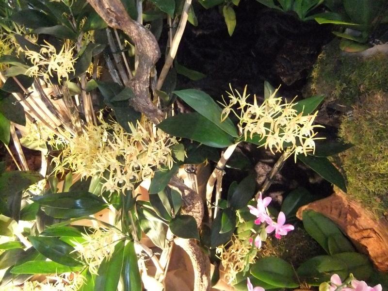 Orchideen-Ausstellungen aus aller Welt Dscf9013
