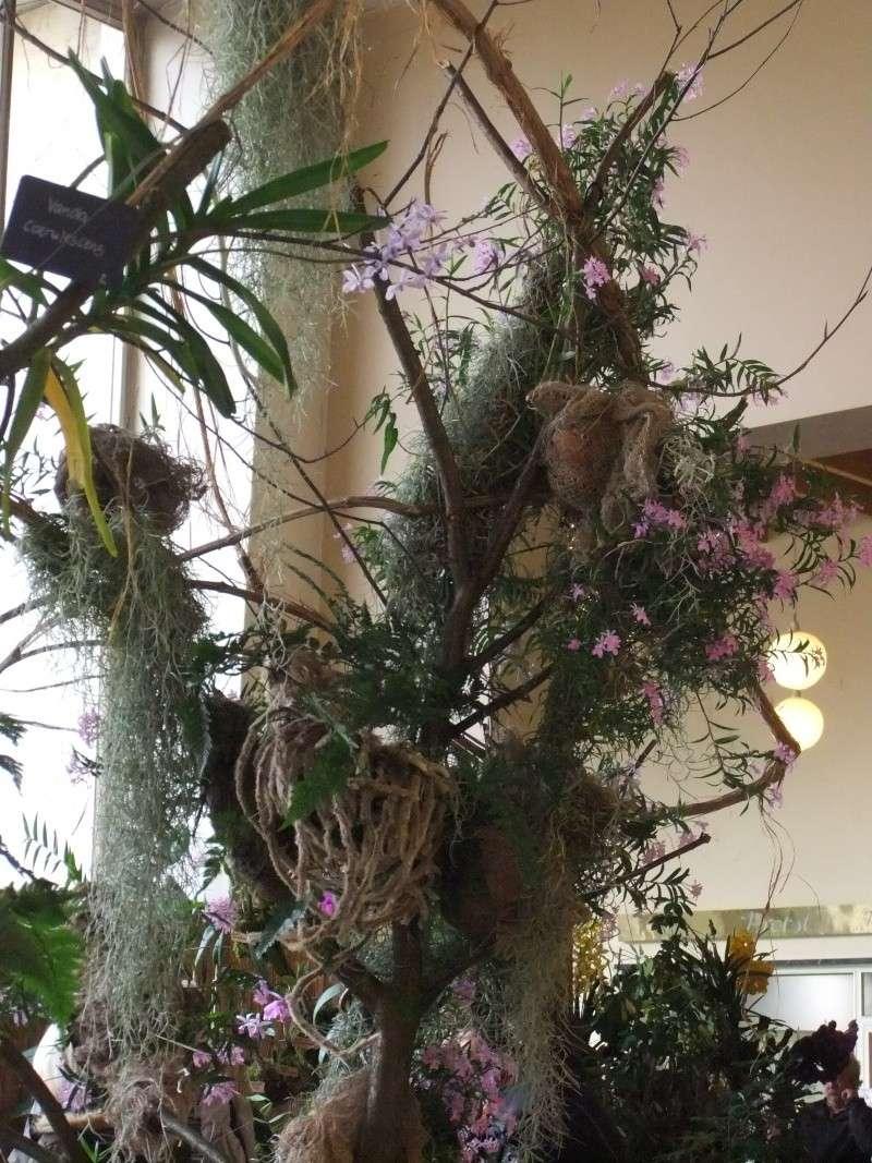 Orchideen-Ausstellungen aus aller Welt Dscf9014