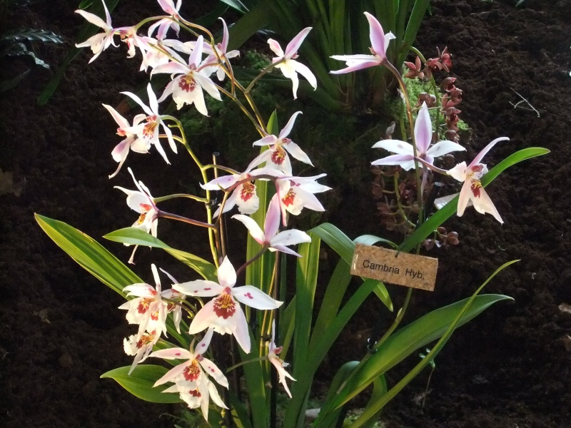 Orchideen-Ausstellungen aus aller Welt Dscf9021