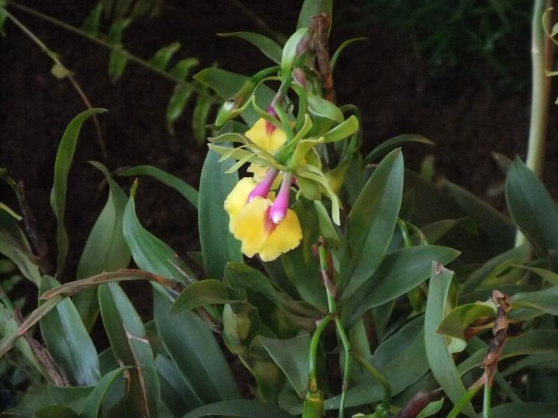 Orchideen-Ausstellungen aus aller Welt Dscf9022