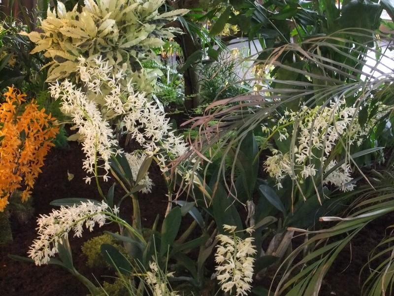 Orchideen-Ausstellungen aus aller Welt Dscf9023