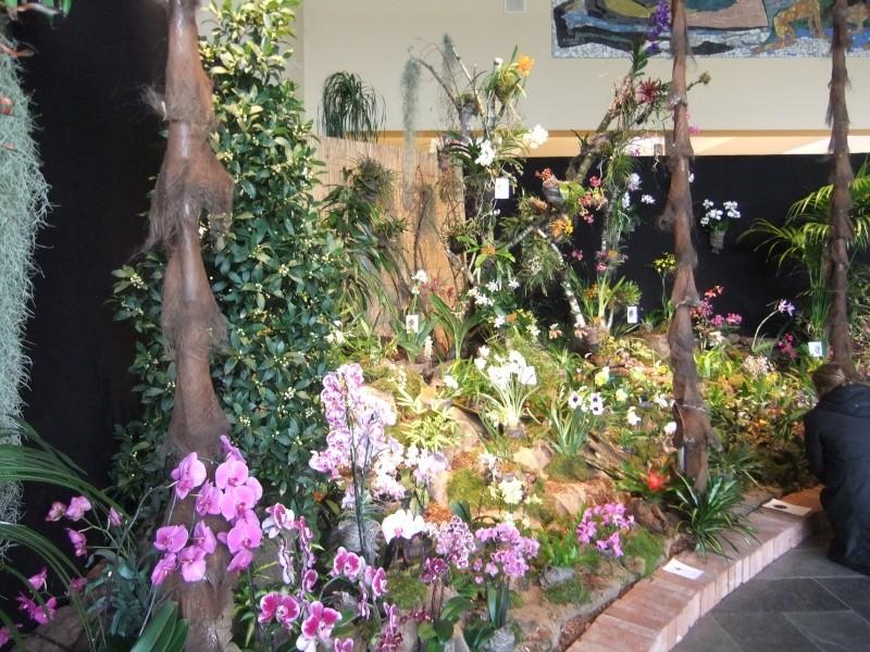 Orchideen-Ausstellungen aus aller Welt Dscf9024