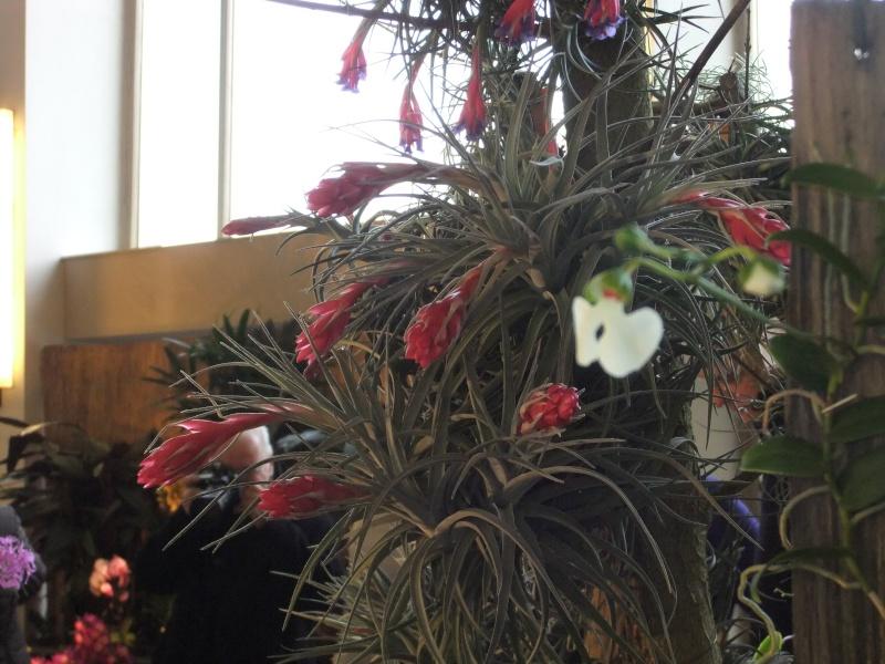 Orchideen-Ausstellungen aus aller Welt Dscf9025
