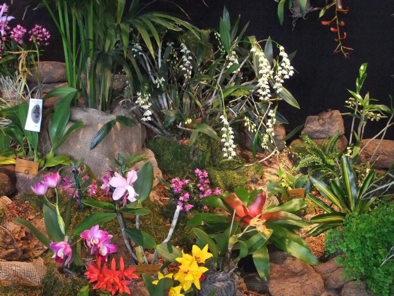 Orchideen-Ausstellungen aus aller Welt Dscf9026