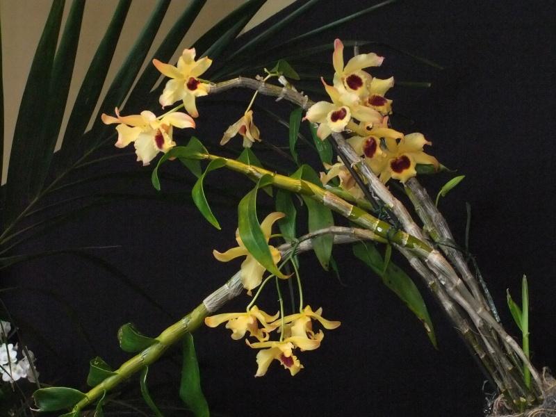 Orchideen-Ausstellungen aus aller Welt Dscf9027