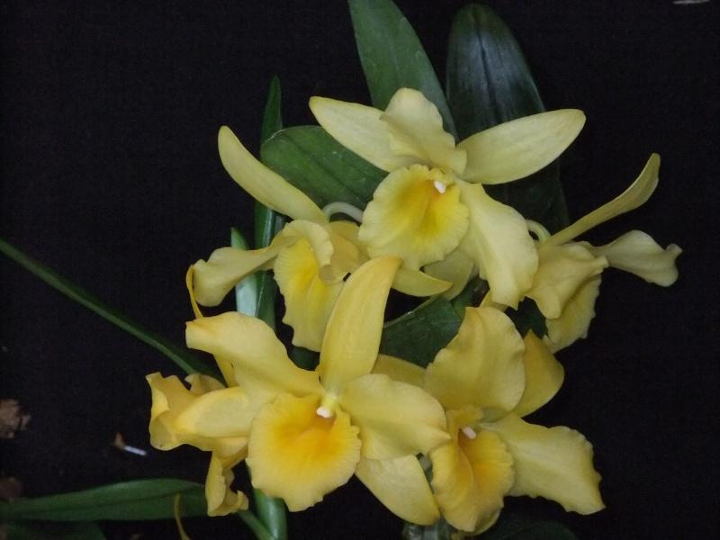 Orchideen-Ausstellungen aus aller Welt Dscf9029