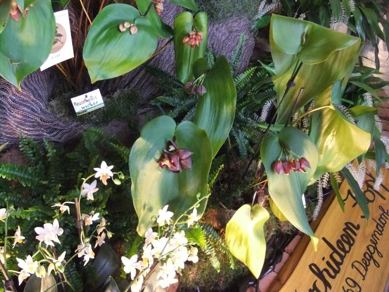 Orchideen-Ausstellungen aus aller Welt Dscf9032