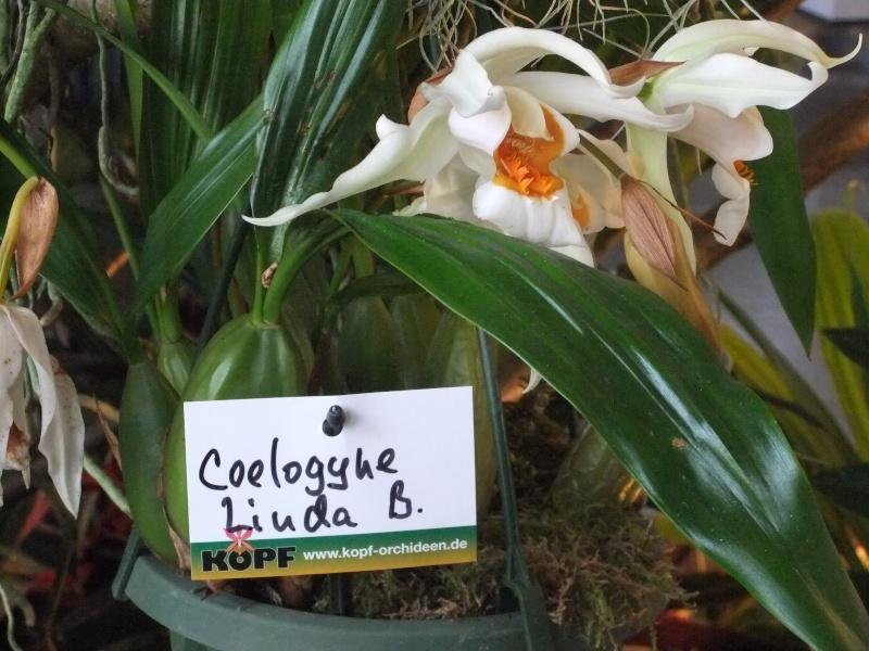 Orchideen-Ausstellungen aus aller Welt Dscf9033