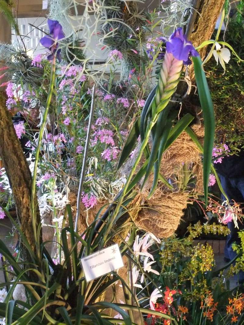 Orchideen-Ausstellungen aus aller Welt Dscf9035