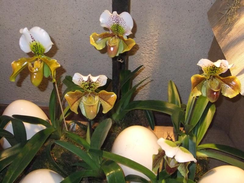 Orchideen-Ausstellungen aus aller Welt Dscf9036