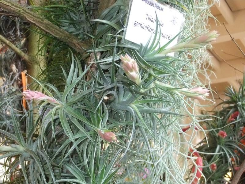 Orchideen-Ausstellungen aus aller Welt Dscf9041