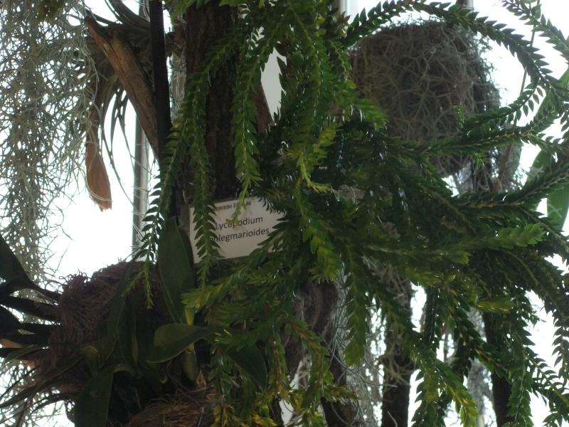 Orchideen-Ausstellungen aus aller Welt Dscf9043