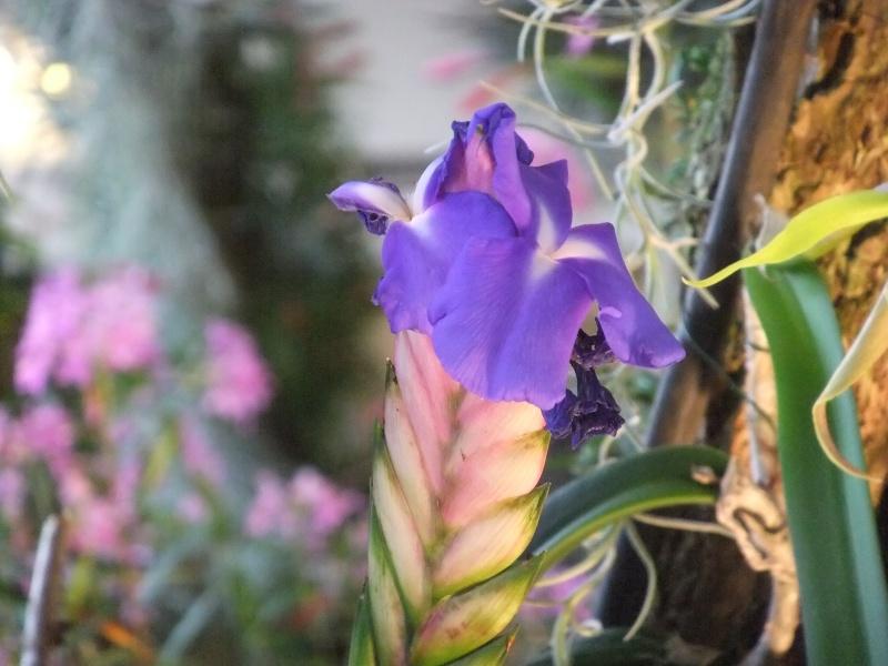 Orchideen-Ausstellungen aus aller Welt Dscf9045