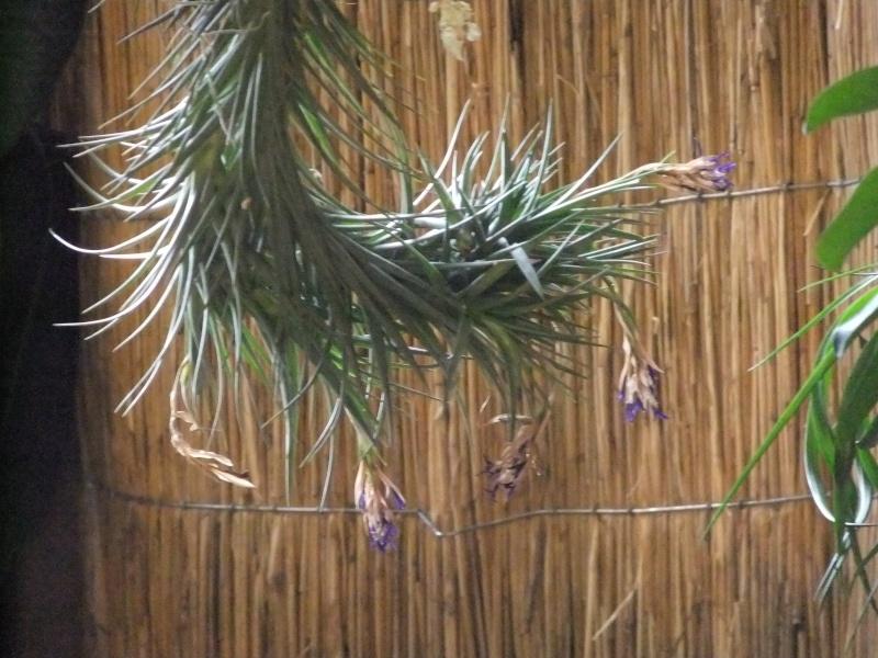 Orchideen-Ausstellungen aus aller Welt Dscf9046