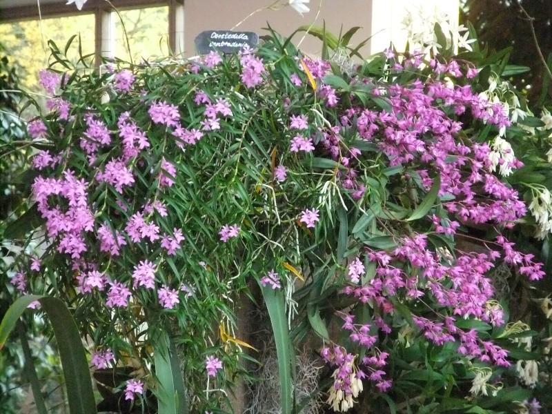 Orchideen-Ausstellungen aus aller Welt Dscf9050