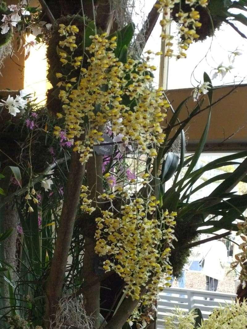 Orchideen-Ausstellungen aus aller Welt Dscf9051