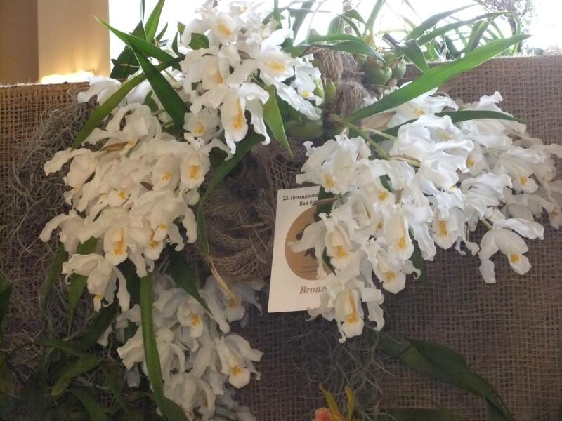 Orchideen-Ausstellungen aus aller Welt Dscf9054