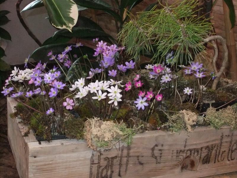 Orchideen-Ausstellungen aus aller Welt Dscf9055