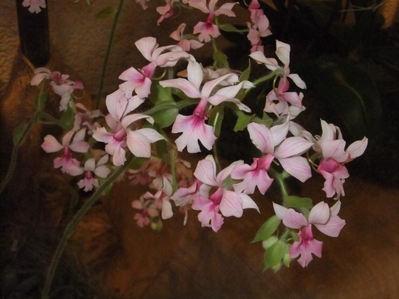 Orchideen-Ausstellungen aus aller Welt Dscf9056