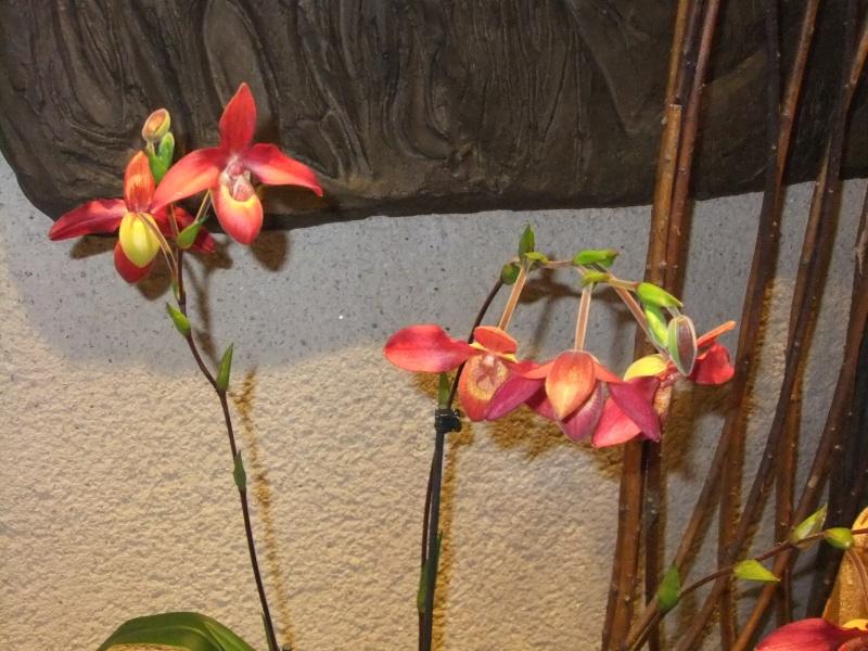 Orchideen-Ausstellungen aus aller Welt Dscf9057