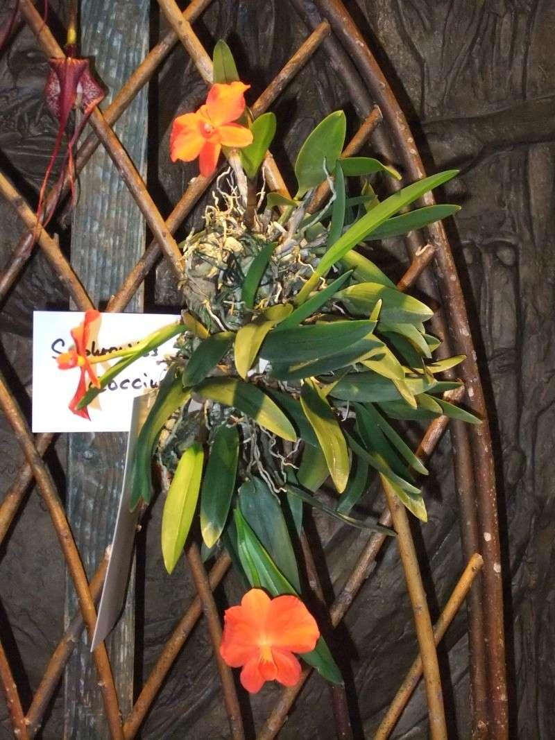 Orchideen-Ausstellungen aus aller Welt Dscf9058